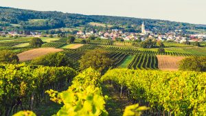 Weingut Kirchknopf Eisenstadt Kleinhoeflein