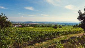 Weingut Kirchknopf Weingarten