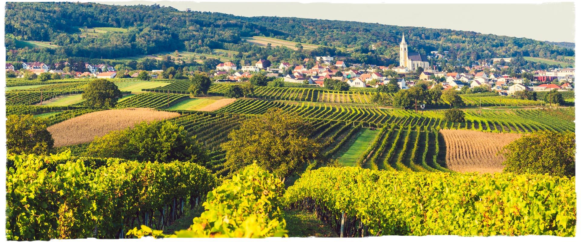 Weingut Kirchknopf Kleinhöflein